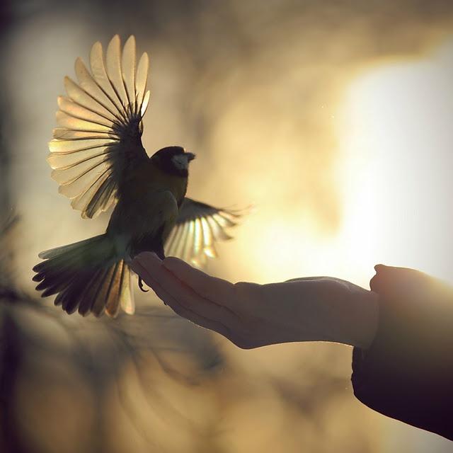 hands-bird